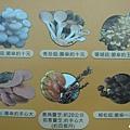 豐年生態農場 (43).jpg