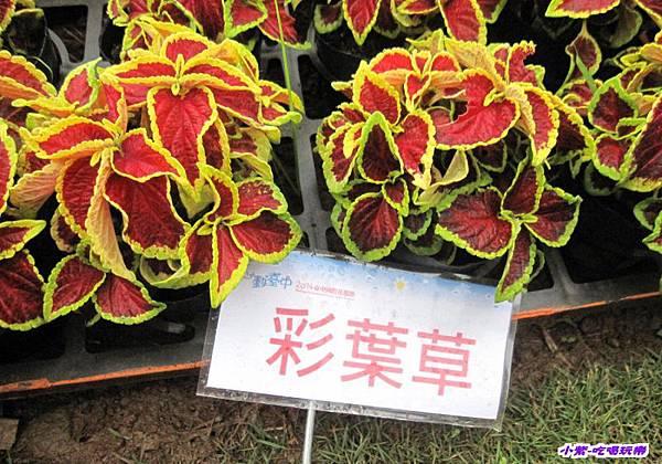 臺中國際花毯節 (18).jpg