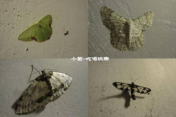 昆蟲.jpg