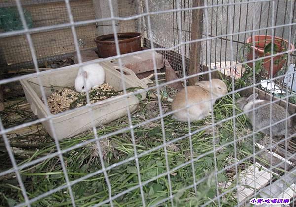 可愛兔子區 (1).jpg