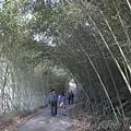 竹林隧道.jpg