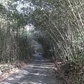 竹林隧道_3.jpg