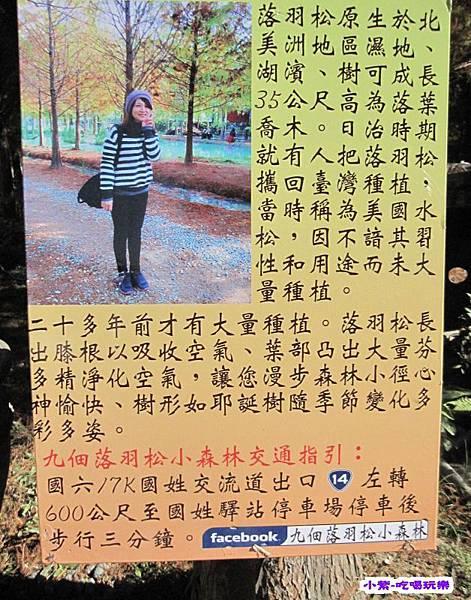 九佃落羽松小森林 (6).jpg