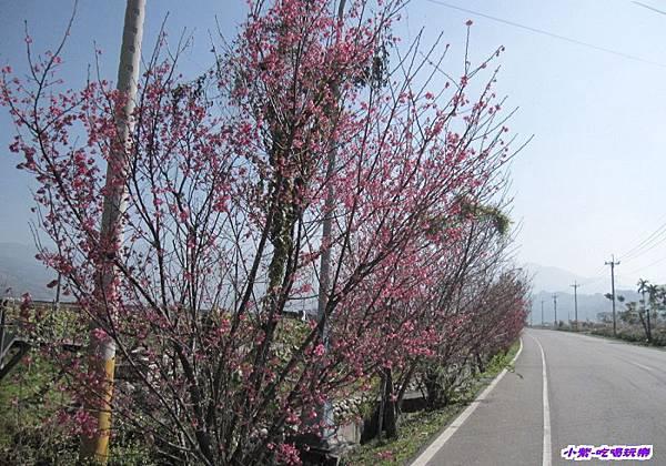 山櫻花 (1).jpg