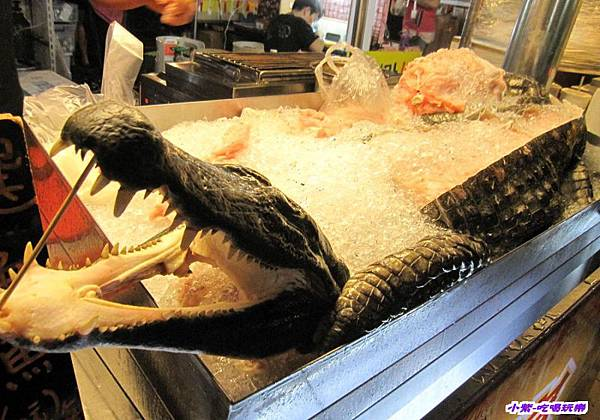 鱷魚饕宴 (4).jpg