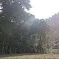 野溪景觀區 (1).jpg