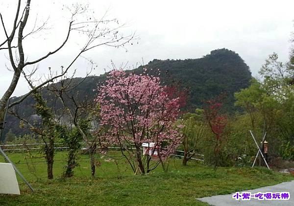 黃媽媽上傳目上景美景 (11).jpg
