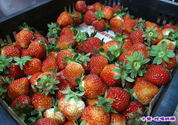 網室草莓 (3).jpg