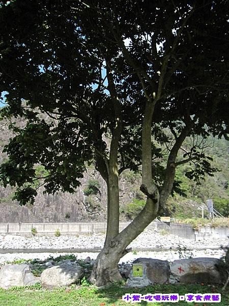 8河畔前大樹.jpg