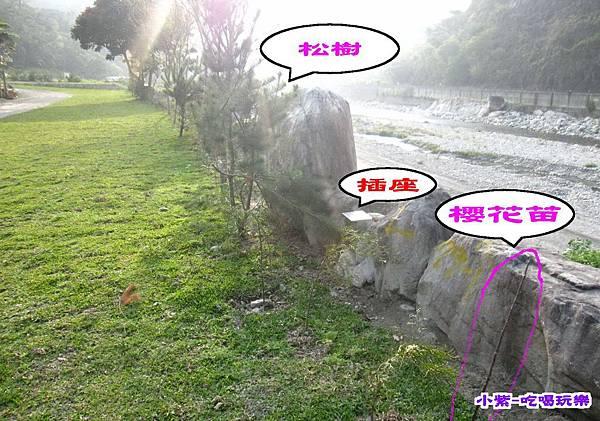 種櫻花.松樹 (1).jpg