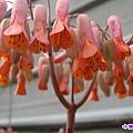 花兒 (1).jpg