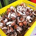 香菇農場.jpg