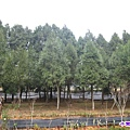 梢楠林.jpg