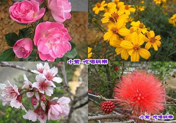 花兒(001).jpg
