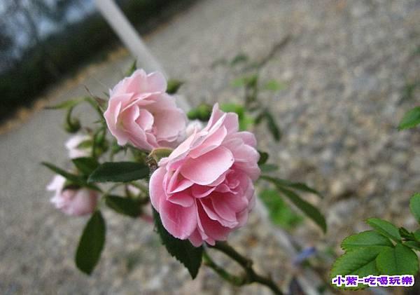 花和果樹 (2).jpg