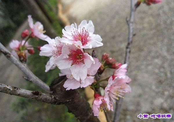 花和果樹 (4).jpg
