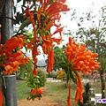 花和果樹.jpg