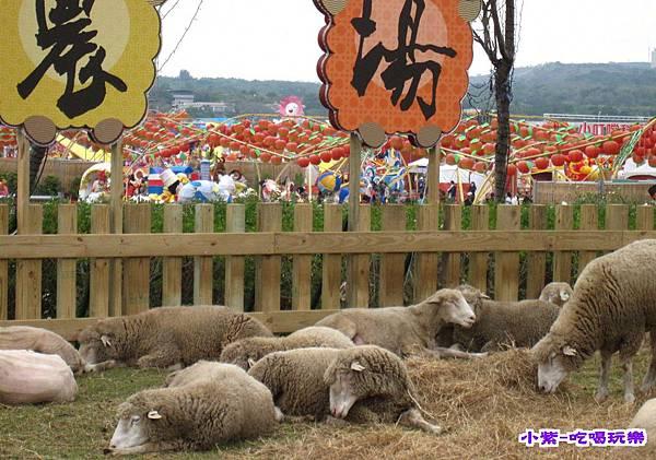 清境農場綿羊.jpg
