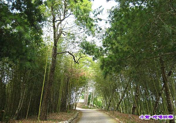 桂竹步道 (1).jpg