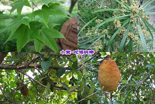 樹、果樹.jpg