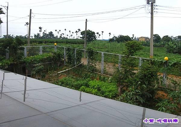 菜園 (1).jpg