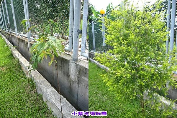 花-樹.jpg