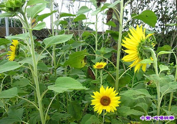 花兒 (2).jpg