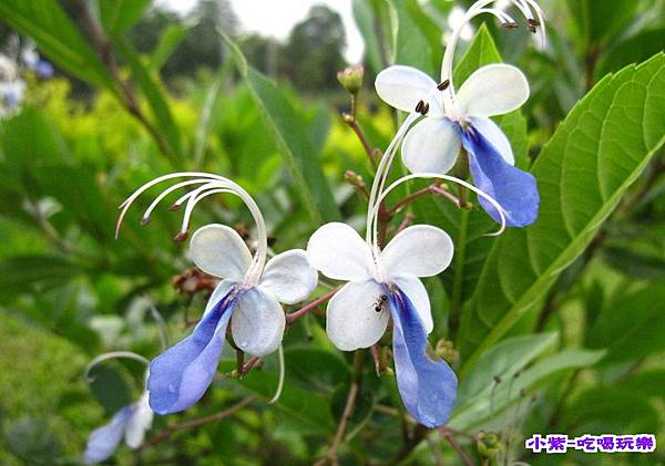 花兒.jpg