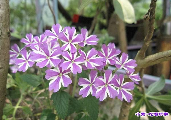 紫色的家露營區 (6).jpg
