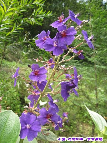 紫色的家露營區 (8).jpg