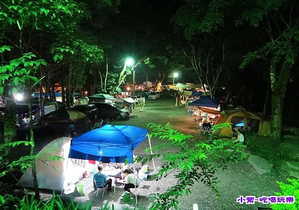 樹林區-夜色 (2).jpg