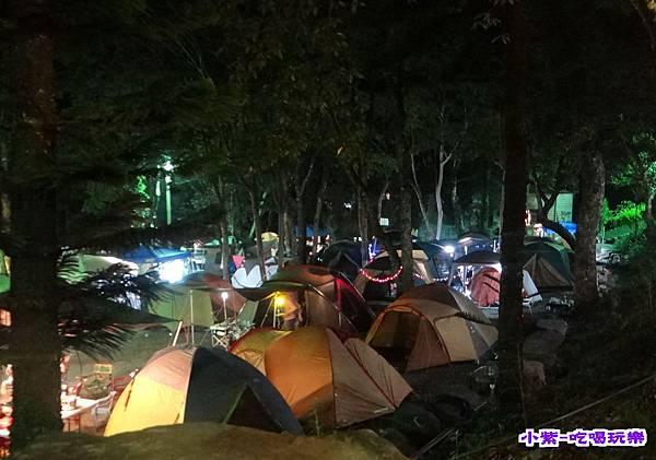 樹林區-夜色 (6).jpg