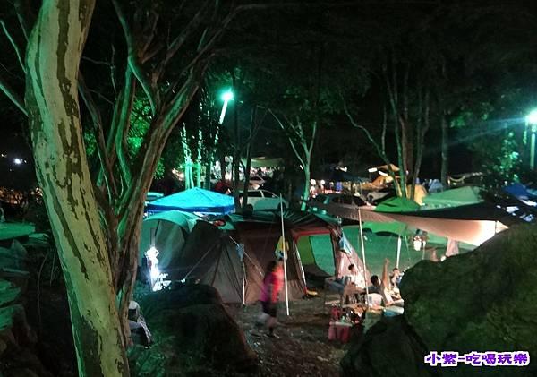 樹林區-夜色 (5).jpg