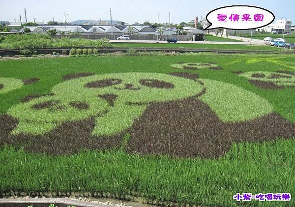 2015熊貓彩繪稻田 (4).jpg