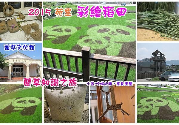 2015苑里熊貓稻田.jpg
