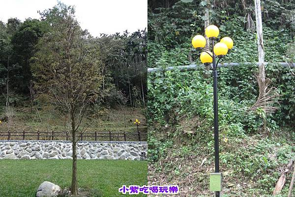 落羽松+夜燈.jpg