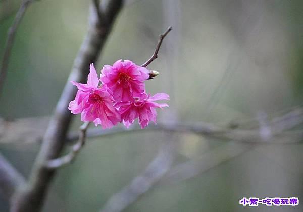 龍泉1.jpg
