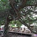 百年榕樹區 (1).jpg
