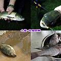 魚獲.jpg