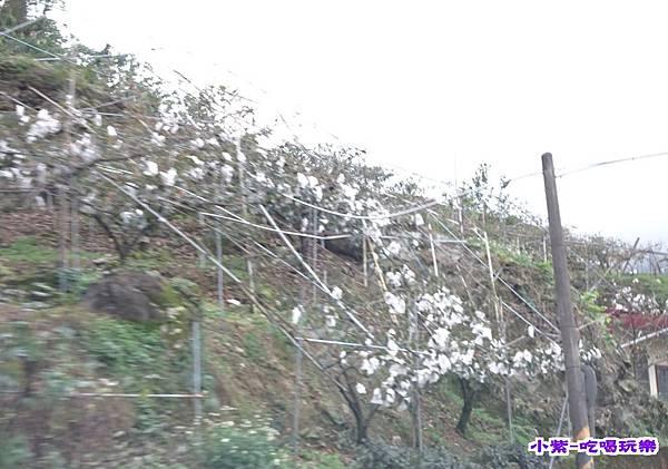 柿子 (1).jpg