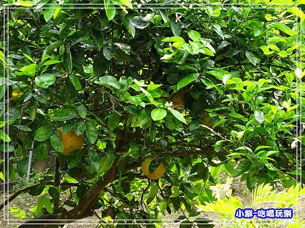 水果100.jpg