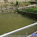 觀賞魚池147.jpg