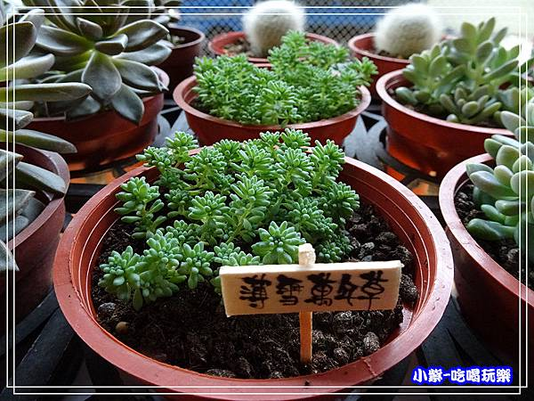 桃園假日農業創意市集 (44)35.jpg
