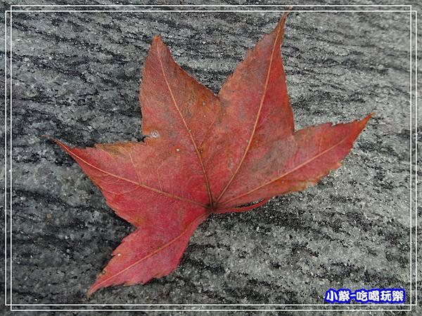 森林風呂泡湯 (1)5.jpg