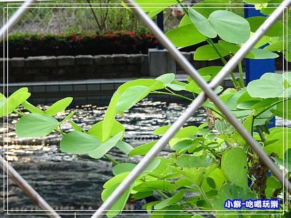 溫泉游泳池 (1)18.jpg