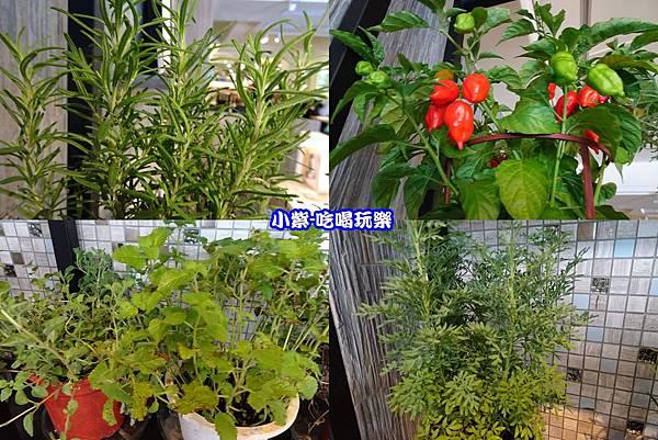 香草植物 -拼圖.jpg