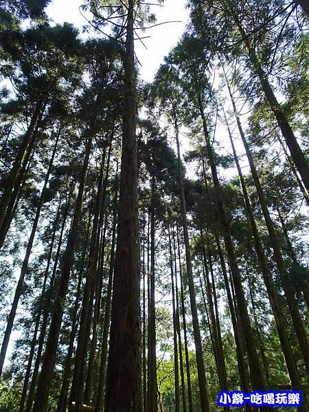 馬武督-綠光森林3.jpg