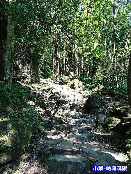 馬武督-綠光森林5.jpg