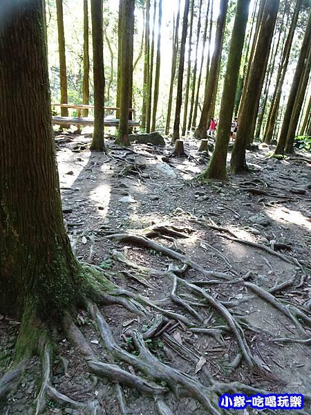馬武督-綠光森林6.jpg
