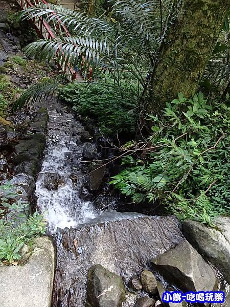 馬武督-綠光森林13.jpg